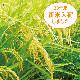 【令和2年産新米入荷】 藤原さんちの お米 10kg 【BMDなかま野菜】