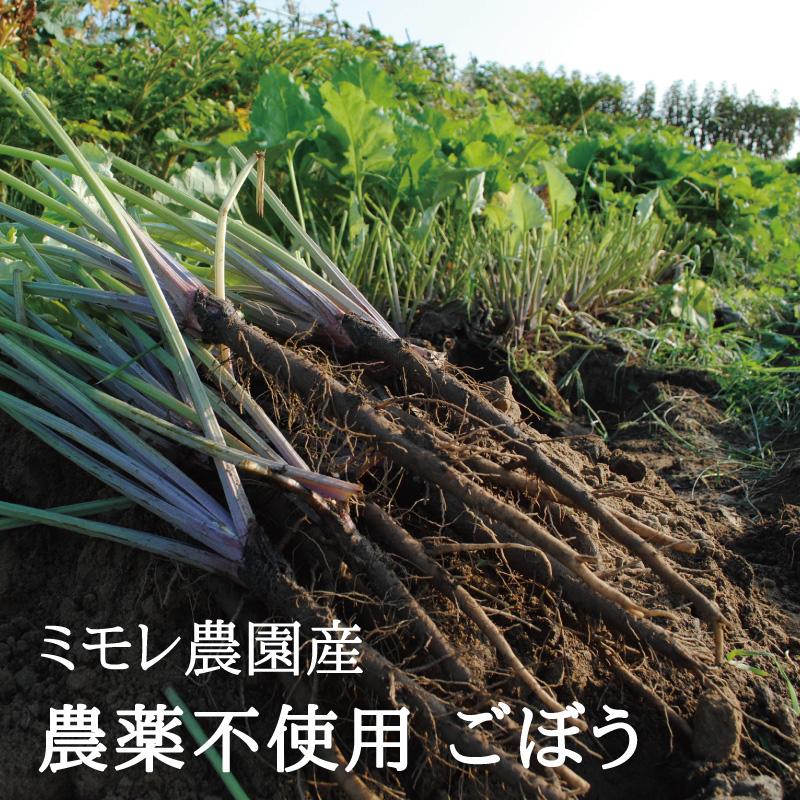 お野菜を食べるスープ 葉ごぼうの和風ホワイトスープ 5袋  【ミモレ農園マルシェ】