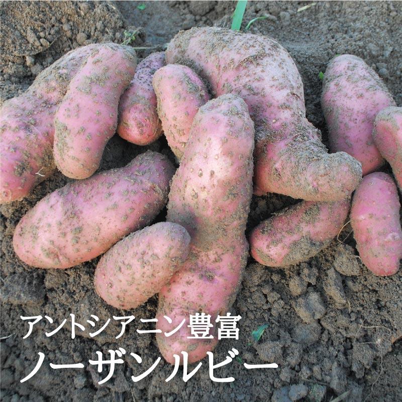 お野菜を食べるスープ 紅ポテト ポタージュ  【ミモレ農園マルシェ】