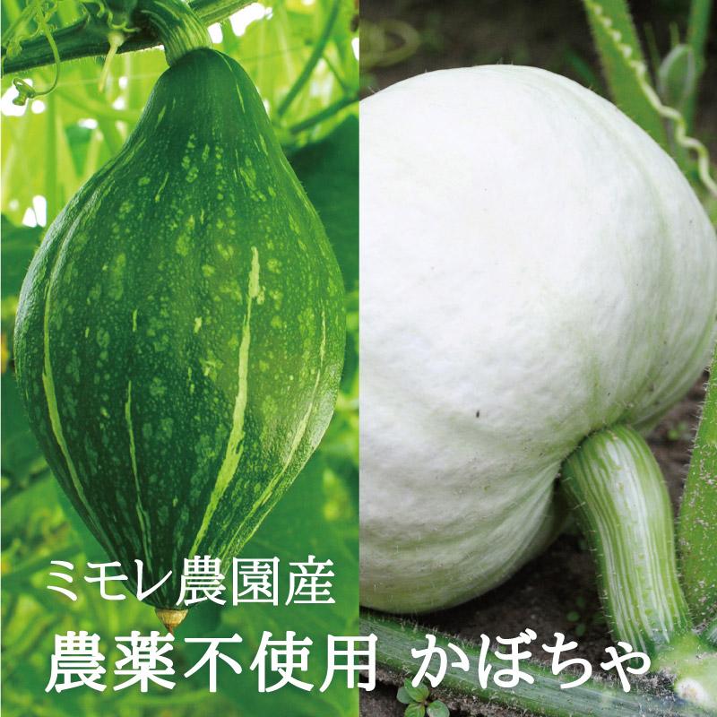お野菜を食べるスープ かぼちゃポタージュ 5袋セット  【ミモレ農園マルシェ】