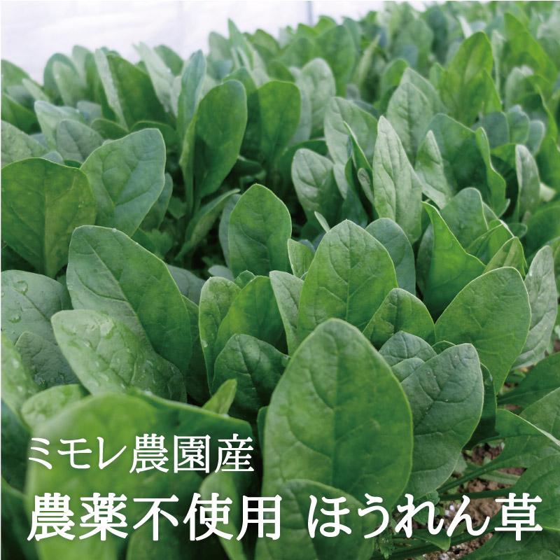 お野菜を食べるスープ ほうれん草ポタージュ 【ミモレ農園マルシェ】