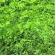 アロマサシェ&精油 ひのき葉(S) 芳香・消臭袋