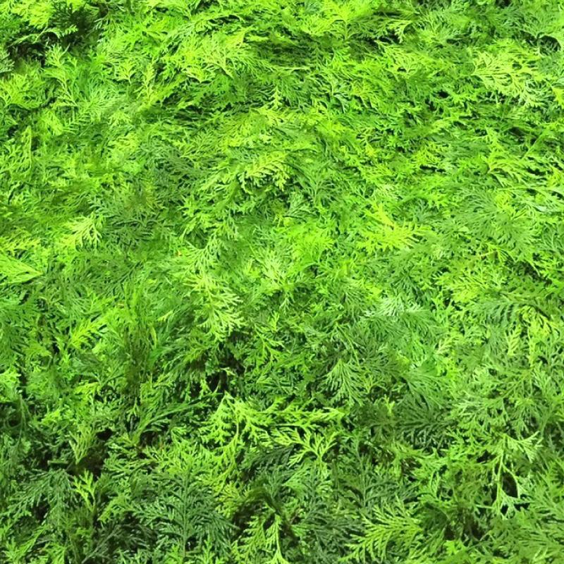 アロマサシェ&精油 ひのき葉(L) 芳香・消臭袋