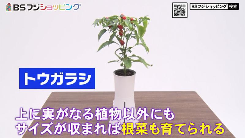 水耕栽培キット Botanium(ボタニアム)