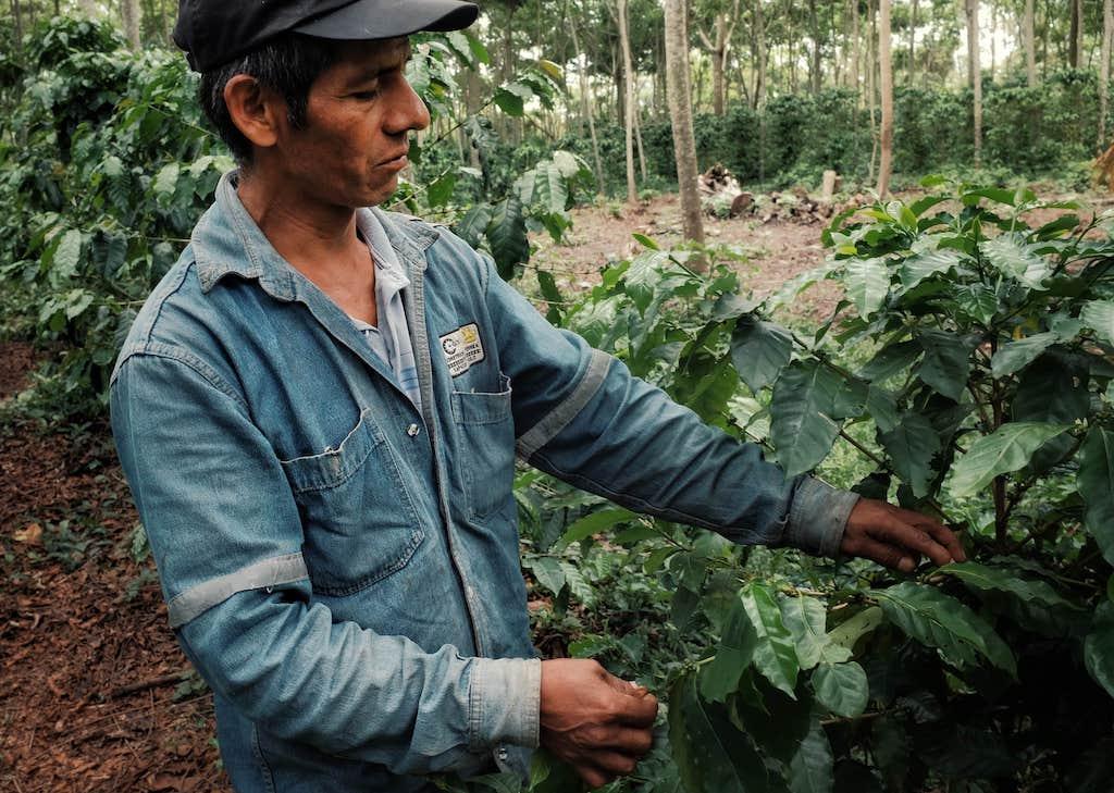ボリビア コパカバーナ農園 (100g〜300g)