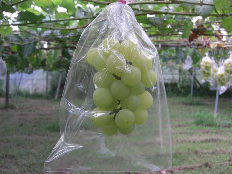BIKOO - S 小 (165×225) サイズ (農産物保護用袋) 100枚入
