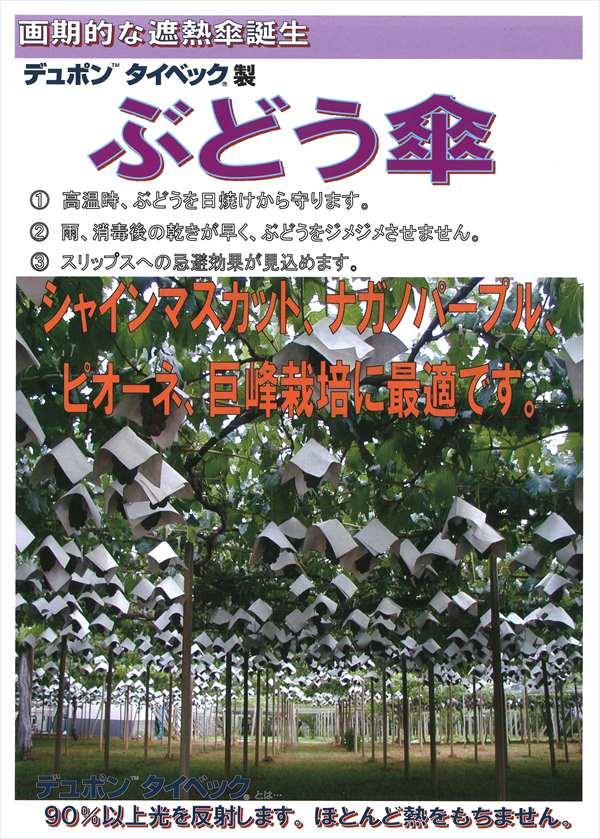 タイベック傘パンチ穴(カサジゾウ用) 27×27(50入)