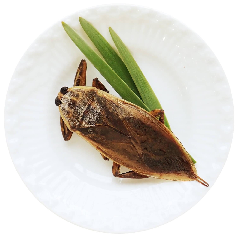 冷凍 タガメ オス フルーティーな香りの人気食材