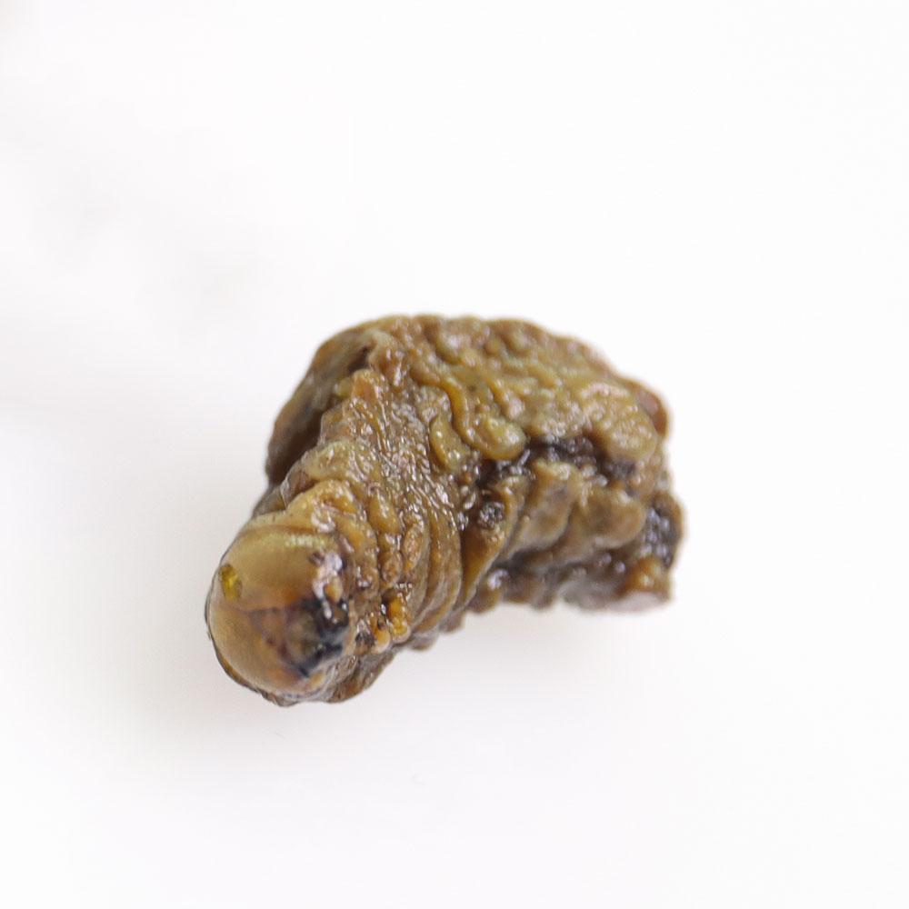 Mopane Worms 5g(モパネワーム5g)
