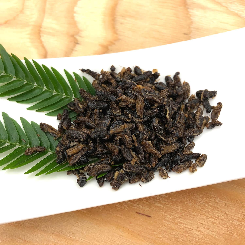 Termite Alates 10g (羽白アリ10g)