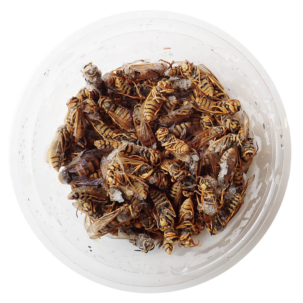 【国産】冷凍 蜂mix 成虫 (100g)