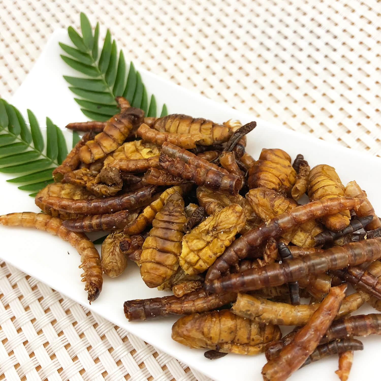 Mixed Pupae2 17g(サナギ,幼虫ミックス2 17g)