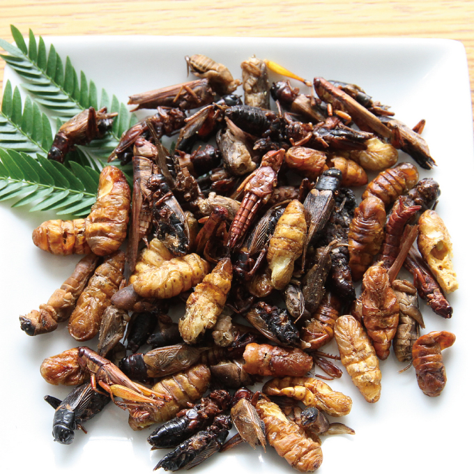 Mixed Bugs 15g(昆虫ミックス�15g) (5種類)x 10袋