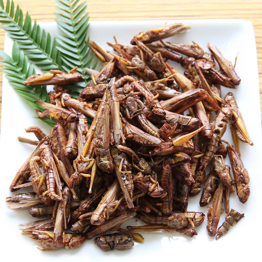 Grasshoppers15g(グラスホッパー15g)