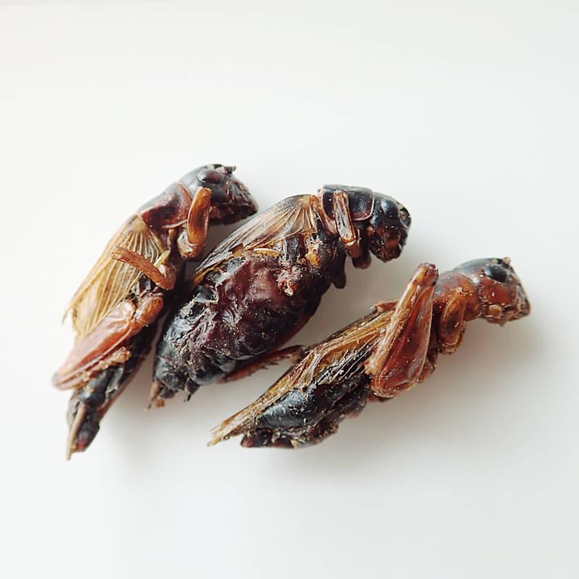 Black Crickets15g(フタホシコオロギ15g)