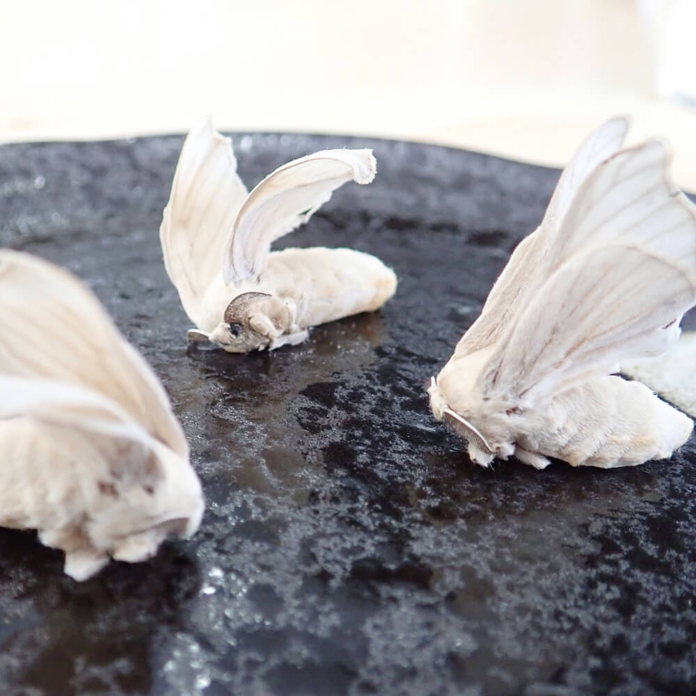 【国産】冷凍 カイコ 成虫(羽なし)(100g)