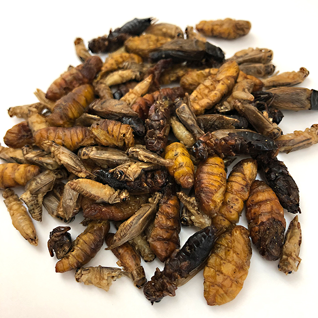 Mixed Bugs15g(昆虫ミックス�15g)