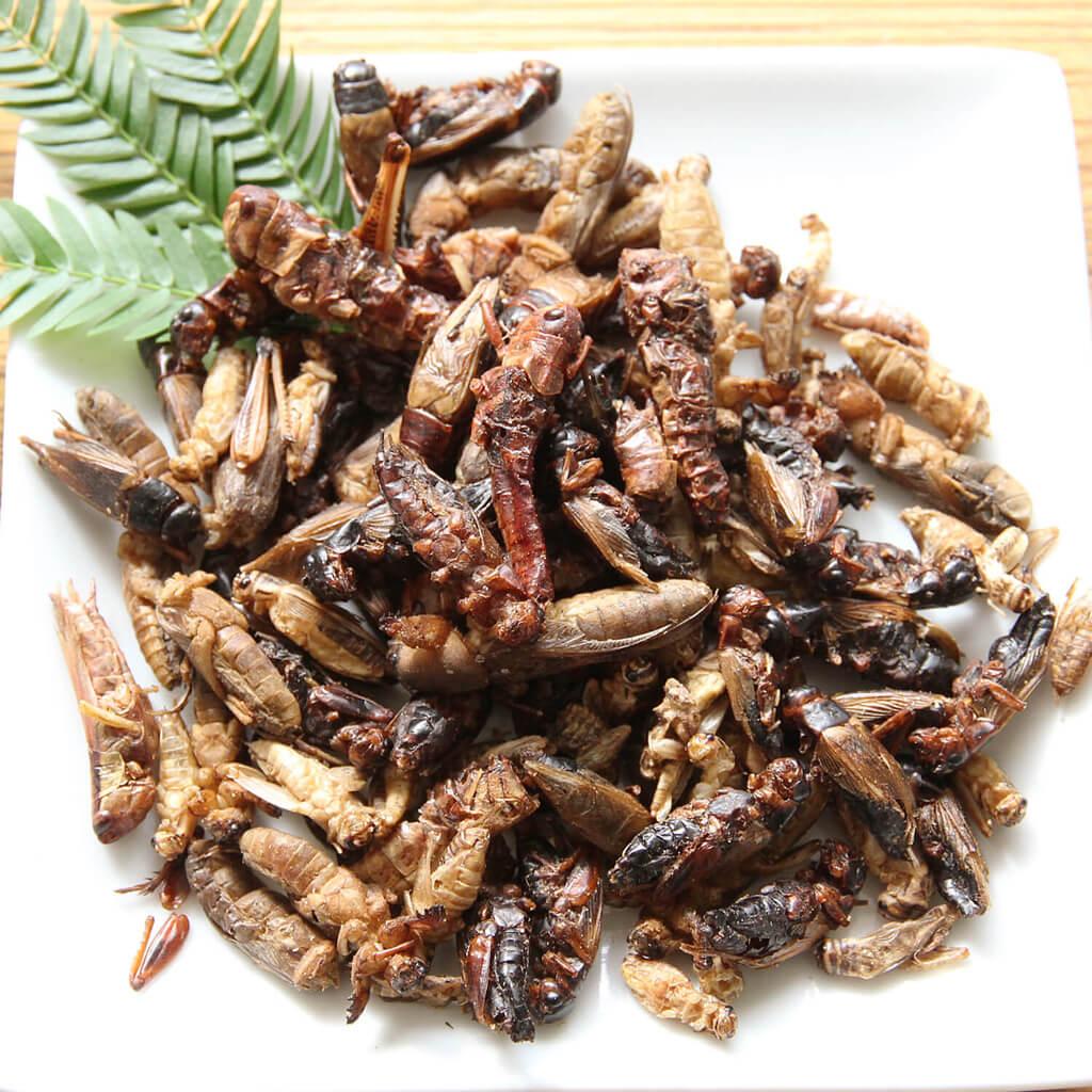 Orthoptera mix15g (バッタミックス15g)