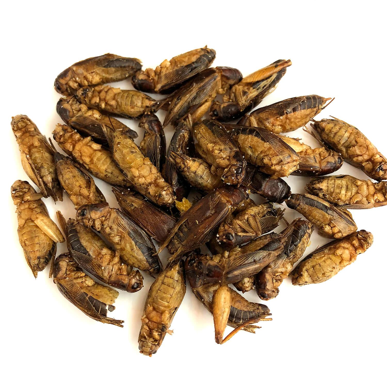 業務用サイズ Jamaican Crickets 1kg  (ジャマイカンコオロギ 姿 ドライ 1kg)