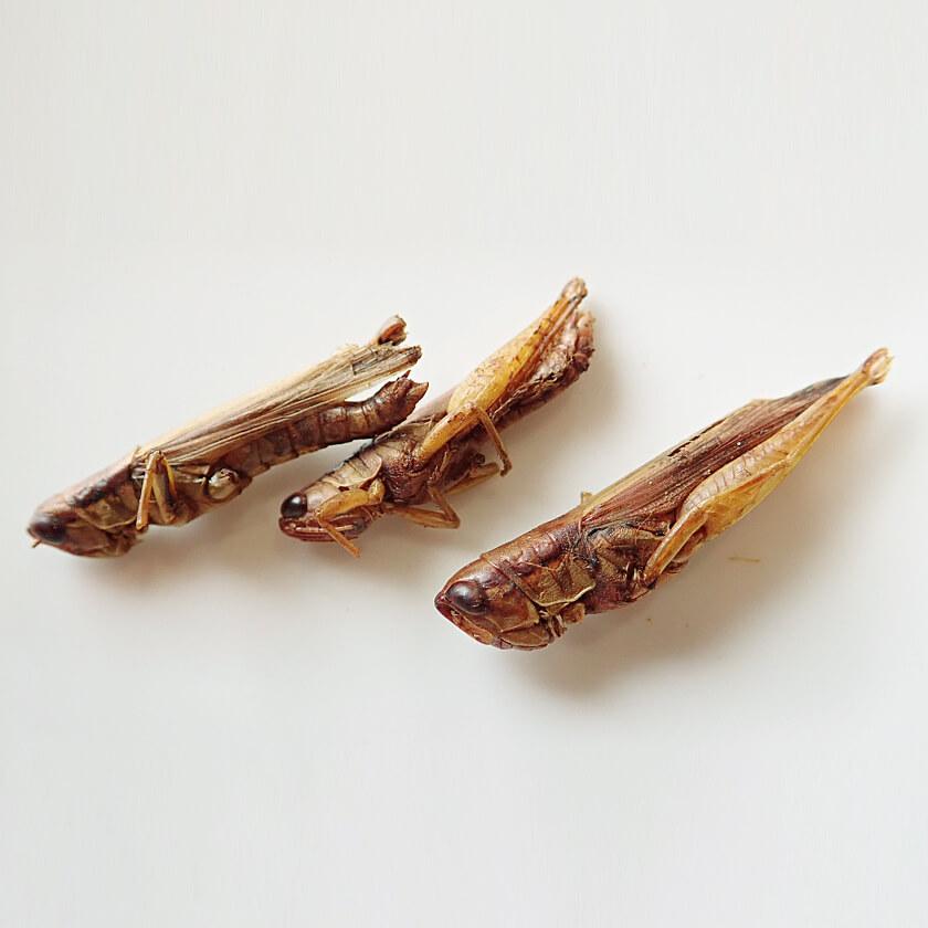 業務用サイズ Grasshoppers 1kg(グラスホッパー 姿 ドライ 1kg)