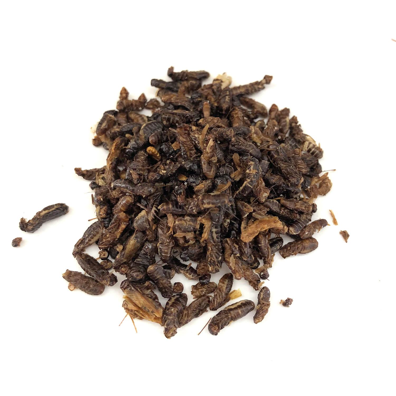 Termite Alates 10g (羽白アリ10g)   x  10袋