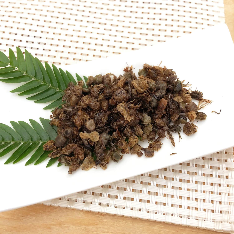 業務用サイズ Queen Weaver Ants 1kg (女王ツムギアリ 姿 ドライ 1kg)