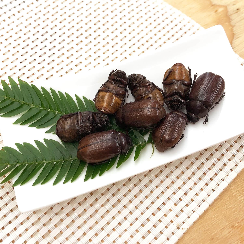 業務用サイズ Small June Beetles 1kg (コガネムシ 姿 ドライ 1kg)