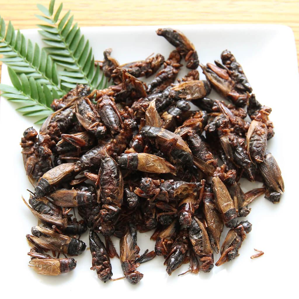 Black Crickets15g(フタホシコオロギ15g) x 10袋