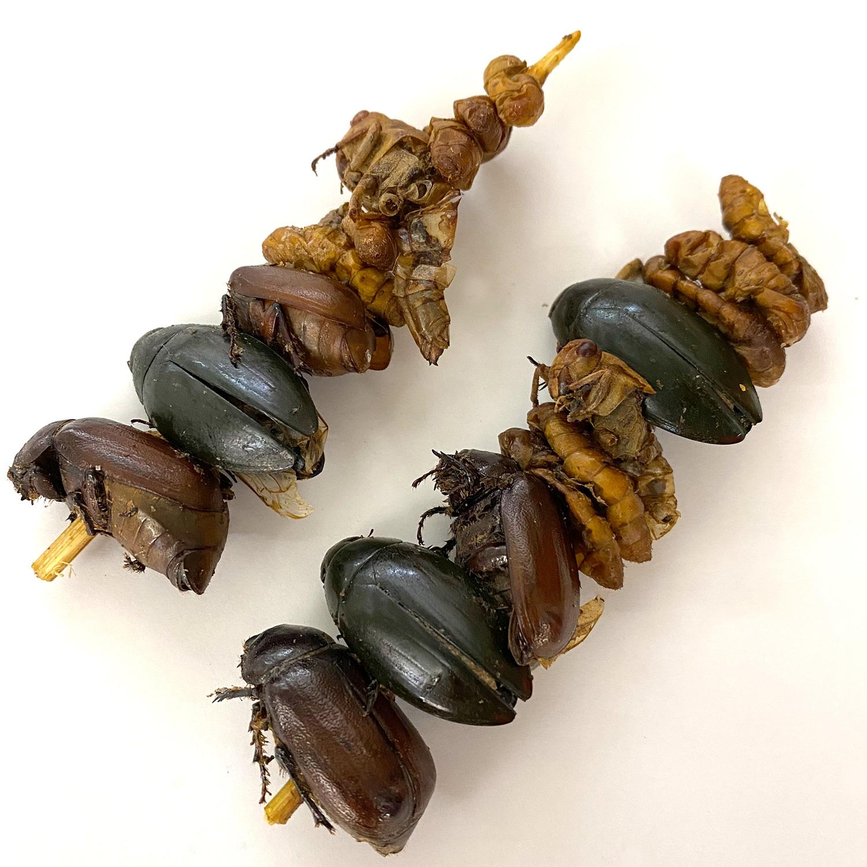 Bug Kebab4g(コガネムシ、ゲンゴロウ、シルクワームサナギ、ワタリバッタ4g)x 10袋