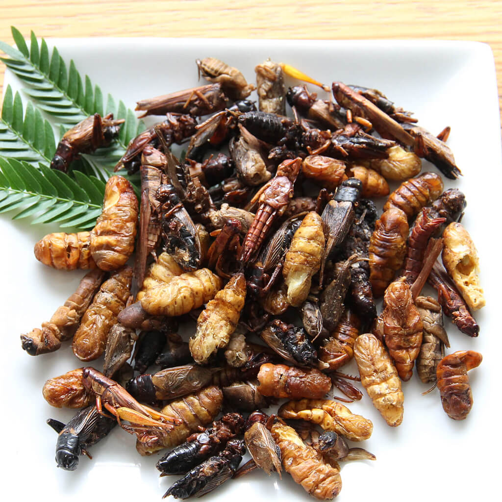 Mixed Bugs15g(昆虫ミックス�15g)  x 10袋