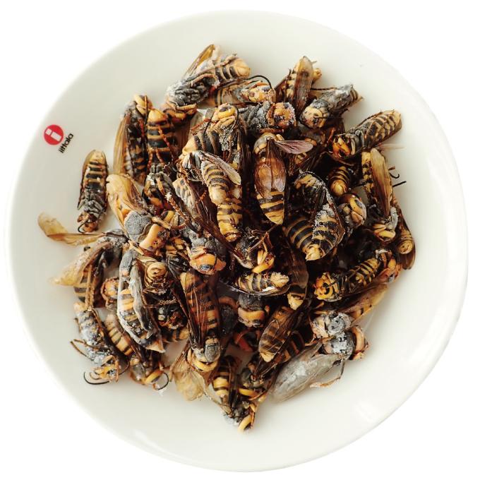 【国産】冷凍 ほろ酔いオオスズメバチ 成虫 (100g)