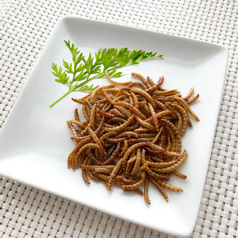 【賞味期限:2021.2.25まで!賞味期限間近の為50%OFF】Mealworms10g(ミルワーム10g)