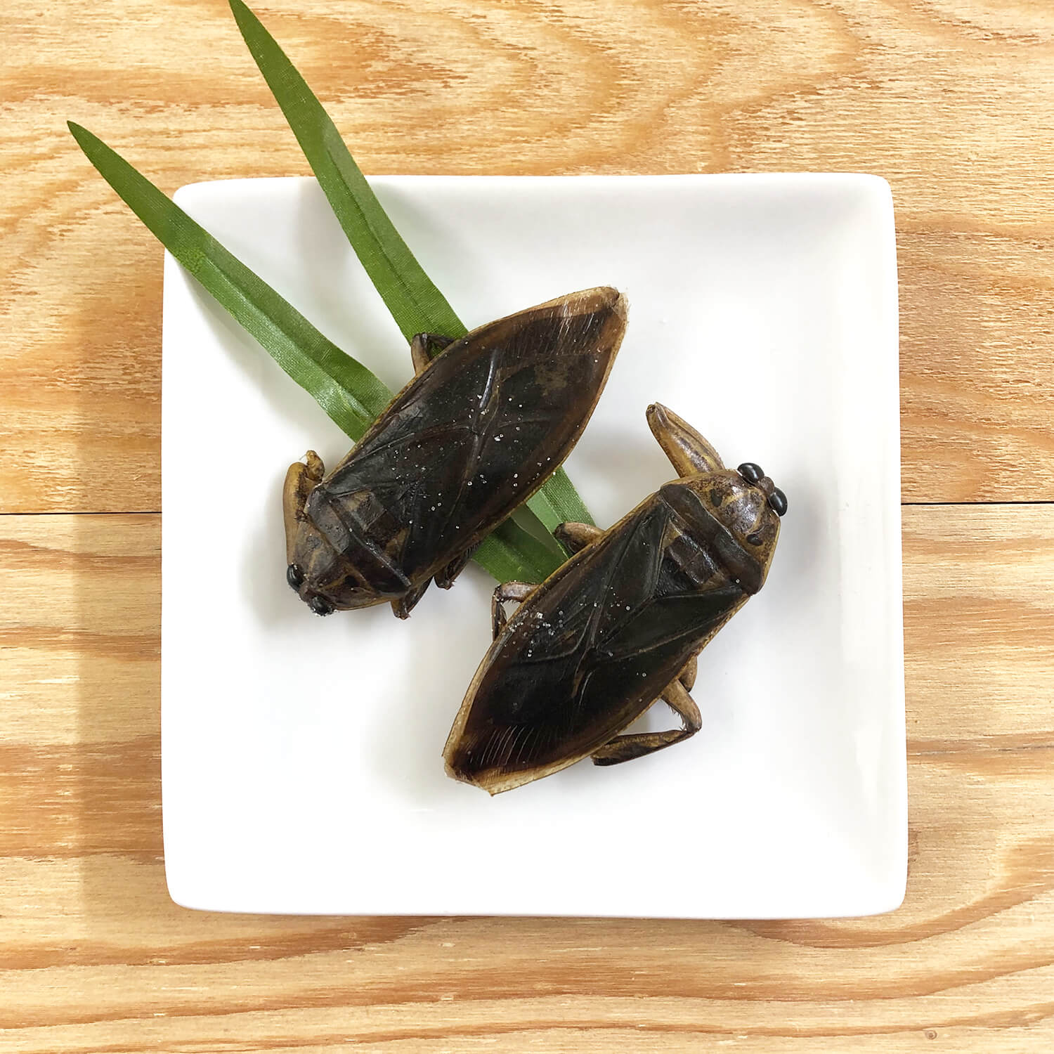 Giant Waterbugs8g(タガメ8g)
