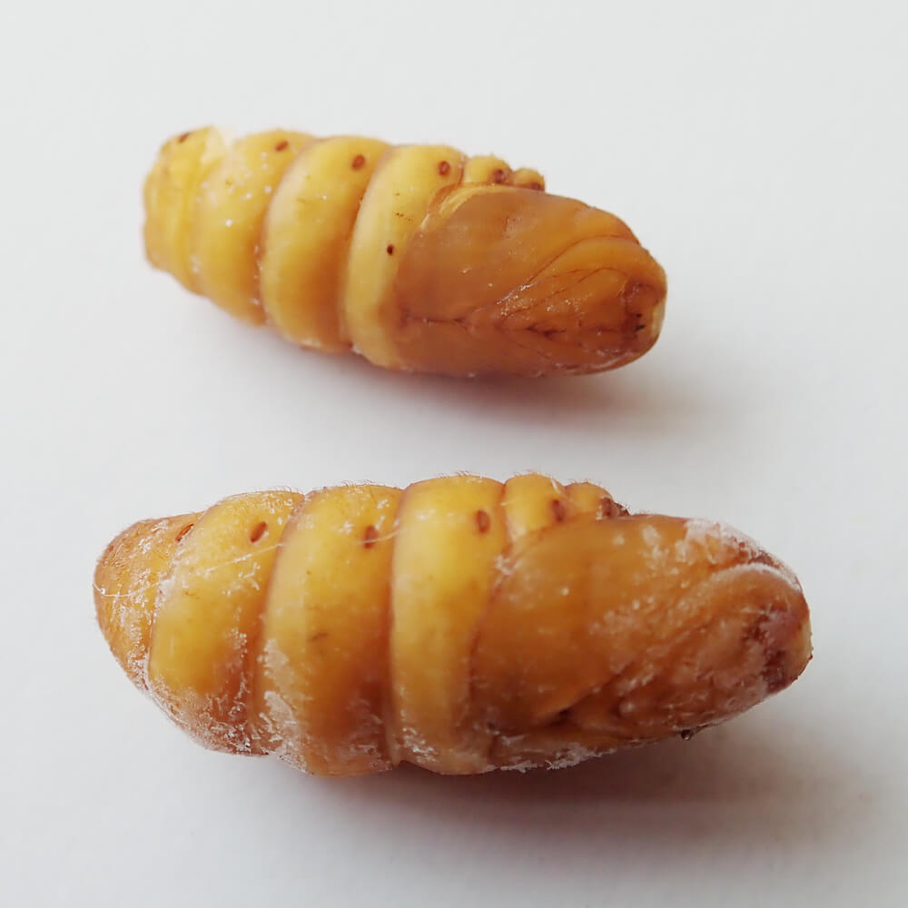 【国産】業務用サイズ 冷凍 カイコ サナギ まゆ無し (1kg)