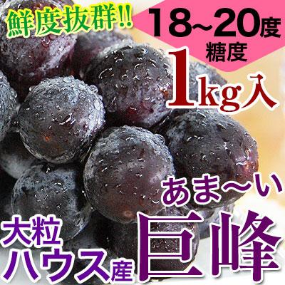 鮮度抜群!朝採り巨峰1kg(2〜4房入)2020年販売開始!<br><br>ハウス栽培<br>糖度18〜20度!大変みずみずしく、甘さたっぷりの大粒ぶどう