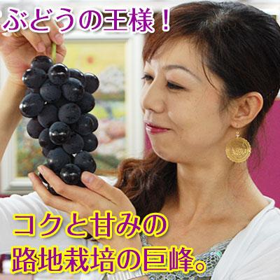 巨峰1kg(2〜4房入)<br>和歌山県 有田巨峰村の朝採り巨峰!【ご予約開始】<br><br>大変みずみずしく、甘さたっぷりコクのあるぶどう!<br>※種にご注意下さい。