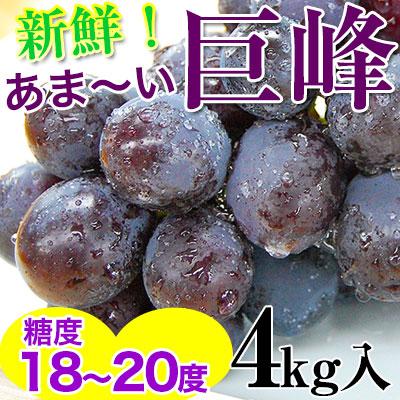 巨峰4kg(10〜13房入)<br>和歌山県 有田巨峰村の朝採り巨峰!【ご予約開始】<br><br>大変みずみずしく、甘さたっぷりコクのあるぶどう!<br>※種にご注意下さい。