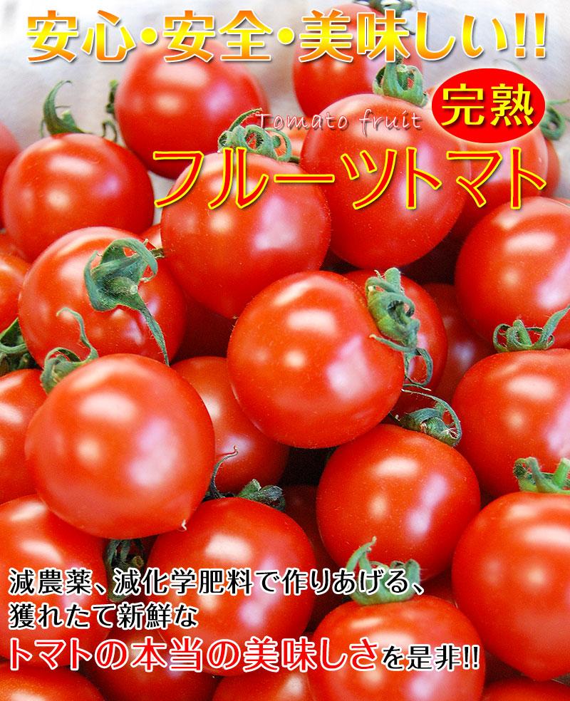 こだわりフルーツトマト2kg(送料無料)<BR>匠の里紀州 假家英明が育てる<BR>減農薬・減化学肥料栽培、土作りにこだわり抜いた安心安全なトマト<BR><BR>驚きの糖度と絶妙のコクが余韻を引く、もうひと口食べたくなる美味しいフルーツトマト!<BR>ハウス栽培/サラダ/パスタ