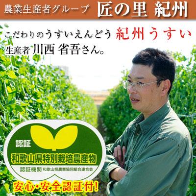 うすいえんどう(紀州うすい)1kg<br><br>和歌山県認証特別栽培農産物としての<br>認証も取得した100%有機肥料で育てる<br>こだわりのえんどう豆。<br><br>匠の里紀州 川西省吾さんが育てる安心安全!!<br>甘みとコクが素晴らしい春の旬野菜を鮮度そのまま<br>産地直送!