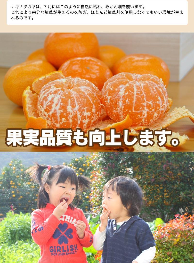低農薬、自然のマルチ栽培で作る美味しい有田みかん Sサイズ 5kg 送料無料(北海道、沖縄を除く) 甘くて美味しい見事な秀品のみ。お歳暮にもお喜び頂けるギフトです