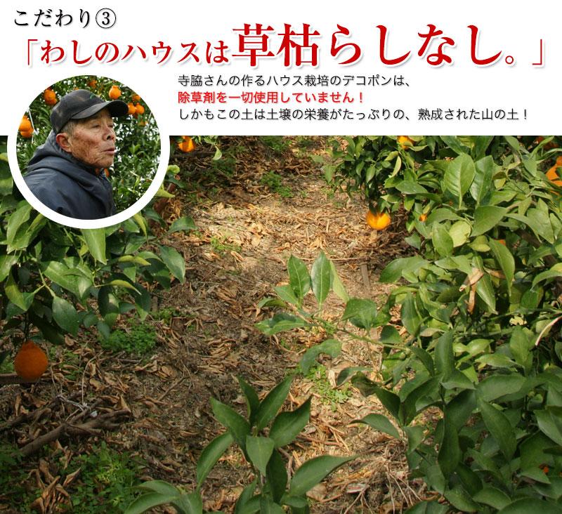2021年ご予約開始 ハウス栽培の完熟デコポン「甘デコ」 <BR>和歌山県産【送料無料】<BR>葉付き手軽な2Lサイズ12玉入(約3kg)<BR><BR>種なし!房ごと食べられる!甘いコクのある不知火(しらぬい)ハウス栽培ならでは美味しさ!独自の有機肥料、除草剤なしで作り上げるこだ