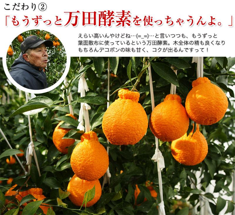 ハウス栽培の完熟デコポン「甘デコ」 <BR>和歌山県産【送料無料】<BR>葉付き驚きの5Lサイズ7玉入(約3kg)<BR><BR>種なし!房ごと食べられる!甘いコクのある不知火(しらぬい)ハウス栽培ならでは美味しさ!独自の有機肥料、除草剤なしで作り上げるこだわり柑橘