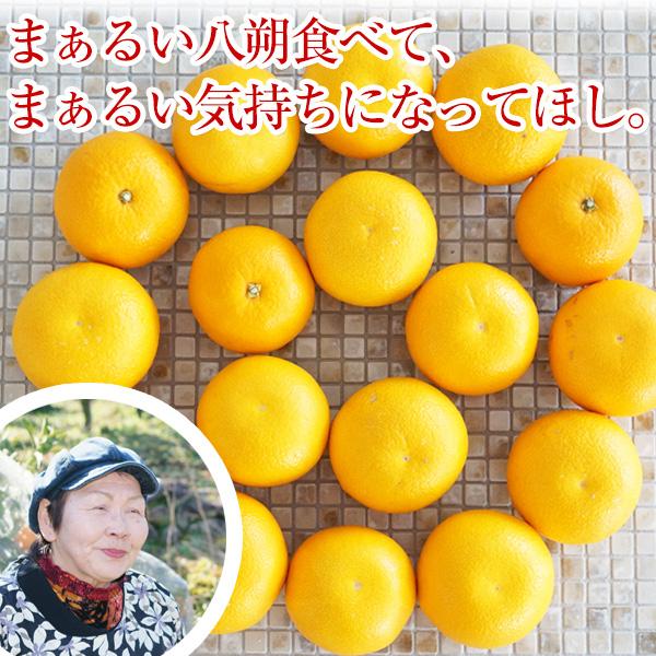 和歌山の八朔(ハッサク)約5kg 減農薬・有機肥料栽培 【送料無料】 L〜2Lサイズ 約5kg(16〜18玉) 上品な甘み、程よい酸味、独特の苦みが美味しい昔ながらのはっさく