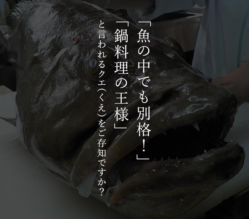 送料無料!鍋の王様 天然クエ鍋セット(くえ鍋)500g(アラ、身 各250g)約3人前 紀州ゆずポン酢2本、簡単鍋レシピ付  幻の魚と言われる高級魚!コラーゲンたっぷりの濃厚な美味しさ!