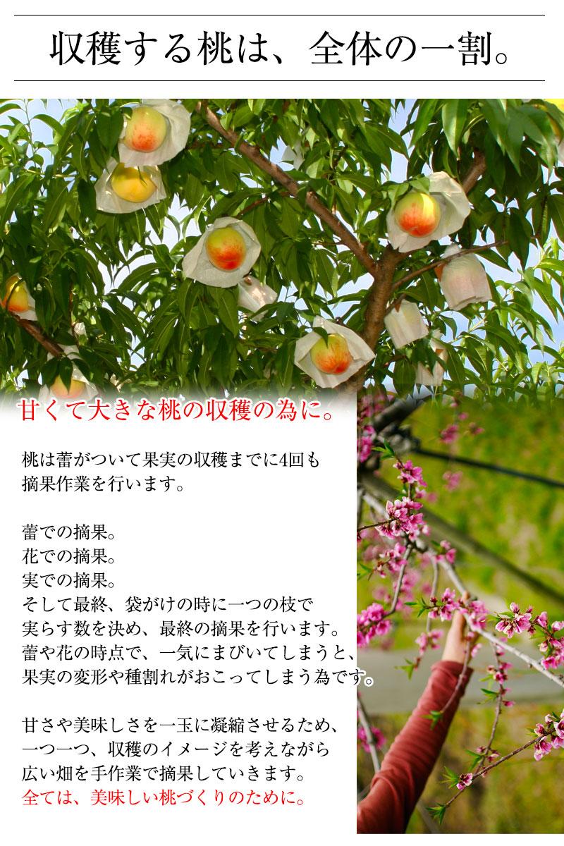 2021年ご予約開始 和歌山県産あら川の桃 7〜8玉入(約2kg)<br>3Lサイズの特秀品!<br>減農薬栽培のエコファーマー認定農家がつくる土、安心安全、味覚にこだわるみずみずしく濃厚な甘みの美味しい桃を産地直送!