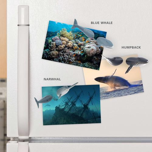 カードやメモを挟むクジラのマグネットセット キッカーランド ホエールバットマグネット
