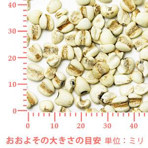 ヨクイニン(ハトムギ) 100g 【ポストお届け可】
