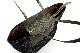 マチウラ[Lsize] キルティングナイロン<ブラック> Type-A