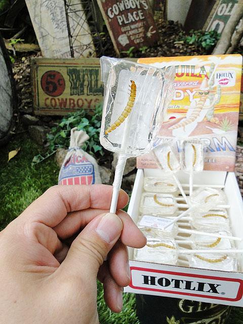 本物のイモ虫入りワームキャンディー(テキーラ味)単品1本