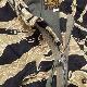 BUZZ RICKSON'S(バズリクソン)M-65 COAT,MAN'S FIELD GOLD TIGER PATTERN [BR14858]【送料無料】